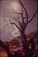 dead_tree_arizona